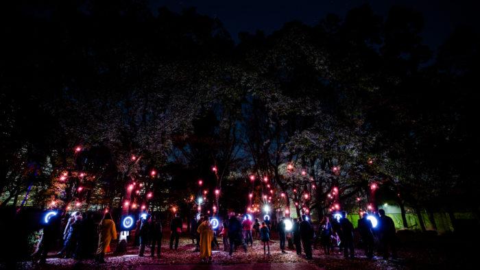 Sakuya Lumina, une promenade nocturne enchanteresse à Osaka
